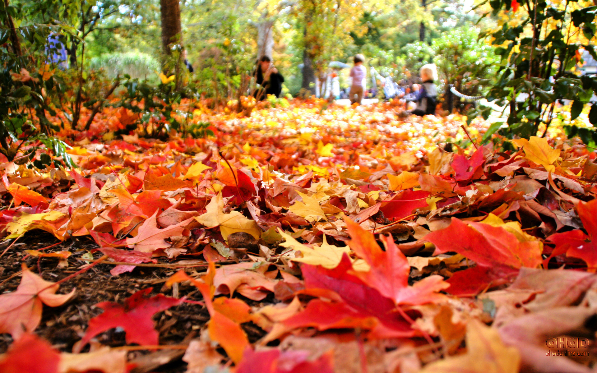 Celebrating the Season: 10 of the Best Canadian Fall Festivals