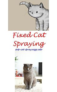 Cat Spraying No More Review | Cat spray, Male cat spraying, Flea spray for cats