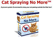 How to stop cats spraying in the house - Windows Server Brain