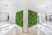 Living Green Walls in Dubai