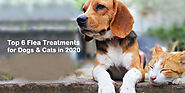 Top 6 Flea Treatments for Dogs and Cats in 2020 - CanadaVetExpress - Pet Care Tips
