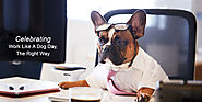 Celebrating Work Like A Dog Day, The Right Way - CanadaVetExpress - Pet Care Tips