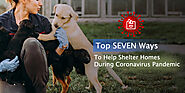 Top SEVEN Ways to Help Shelter Homes During Coronavirus Pandemic - CanadaVetExpress - Pet Care Tips