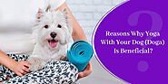 Reasons Why Yoga With Your Dog (Doga) Is Beneficial? - CanadaVetExpress - Pet Care Tips
