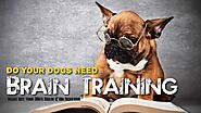 What is your review of Brain Training For Dogs, or do you have any other recommended sources to train your dog, also ...