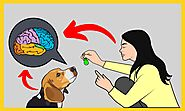 Brain Training For Dogs Review : Is this Just another Scam? | Little Paws Training