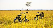 Biking around Rice Fields