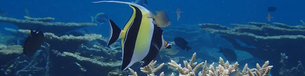 Headline for 05 Maldives sea life that you may spot on your next underwater adventure – Witness magic!