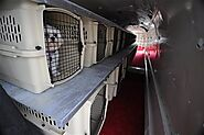 Useful Guidelines Of ANA pet policy For Pet Travel In Flight