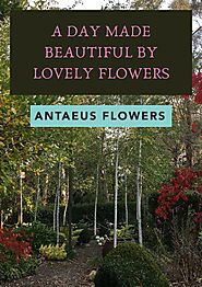 Best Flower Delivery in South Yarra - Antaeus Flowers