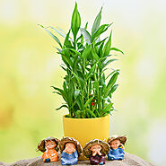 3 Layer Lucky Bamboo and Cute Monks - Indiagift.in