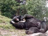 http://travel.wordofsearch.com/2014/08/national-zoological-zoo-park-delhi.html