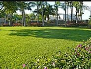Find best lawn care service McAllen, TX