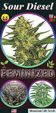 Sour Diesel fem cannabis seeds for sale