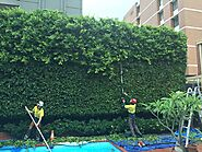 Tree Pruning Melbourne | ArborCraft Tree Services