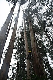 Tree Removal Melbourne | ArborCraft Tree Services