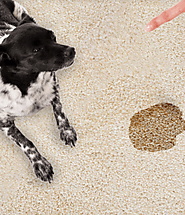 Reason for Choosing Top Carpet Cleaning Pet Stains in St Louis