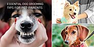 5 Simple Grooming Basics to Keep Your Dog Healthy