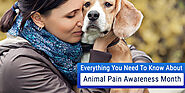 Everything You Need to Know About Animal Pain Awareness Month