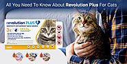 All You Need To Know About Revolution Plus For Cats