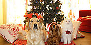 Fun Things to Do With Your Pet This Christmas
