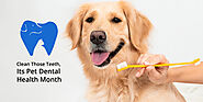 Clean Those Teeth, Its Pet Dental Health Month - CanadaVetCare Blog