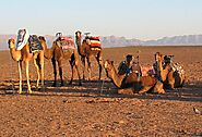 Shared Group tour from Marrakech