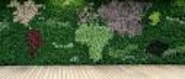 Crystal Cruises Living Wall