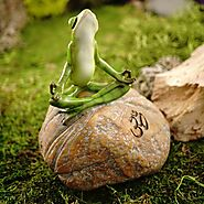 Meditating Frog on Rock