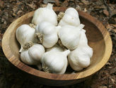 Garlic and Perennial Growing Guide
