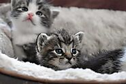 Caring for newborn kittens: 10 Essential Steps - Love4pets.club
