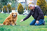 Dog Training: the top 10 common mistakes - Love4pets.club