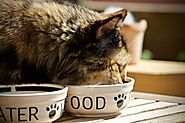 Your cat vomits after eating dry food: 7 main causes - Love4pets.club