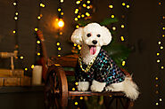 Does Your Need Dog Clothes For Bichon Frise? - SPIRE PET