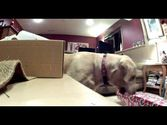 Wrapping Christmas Gifts | Distracted by Cat and Dog