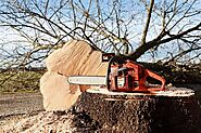 How to Clean a Chain Saw – Step by Step | OutdoorSkillz