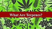 What Exactly Are Terpenes by Nethan Paul - Issuu