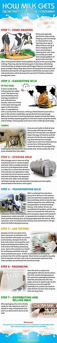 Milk's Journey - From the Cow to the Consumer