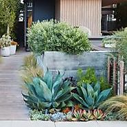 Landscaping Ideas for low water gardens by Daniel Nolan