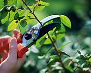 What You Need to Know Before You Prune Shrubs and Trees