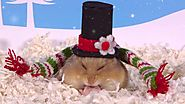 Day 11: Christmas Hats - Cute Hamsters: 12 Days of Christmas