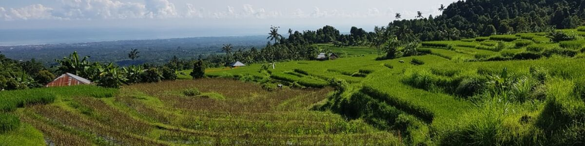 Headline for Explore Rice Paddies in Canggu – Authentic Balinese Fields