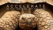 ACCELERATE: Be the Tortoise Not the Hare