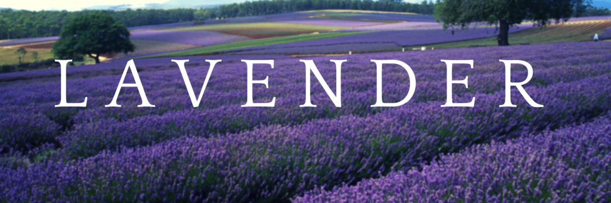 Headline for Lavender Essential Oil - Aromatherapy Recipes