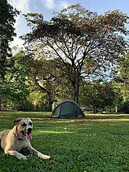 10 Dog-Friendly Camping Spots In Michigan That Will Amaze You