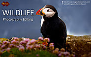 Website at http://www.slideshare.net/imagesolutions/image-editing-services-for-photographers-editing-wildlife-photogr...