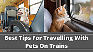 Best Tips For Travelling With Pets On Trains | RailRestro Blog - Food in Train