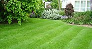 How to maintain your lawn in these simple steps
