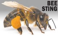 Bee Eradication services melbourne