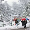 Shimla Honeymoon Packages from Delhi | Shimla Delhi Honeymoon Package | Holidays At India